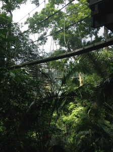 FRIM canopy 1
