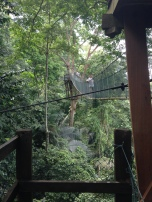 FRIM canopy 10!