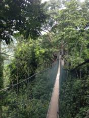 FRIM canopy 2