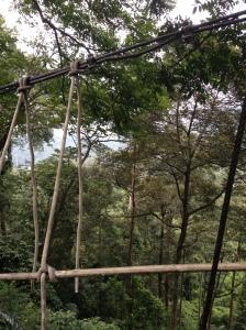 FRIM canopy 3