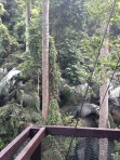 FRIM canopy 4