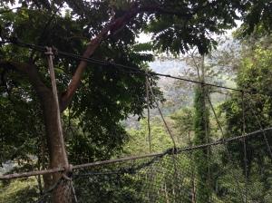 FRIM canopy 6