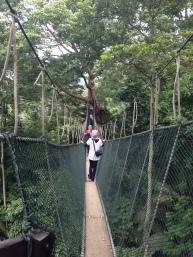 FRIM canopy 8