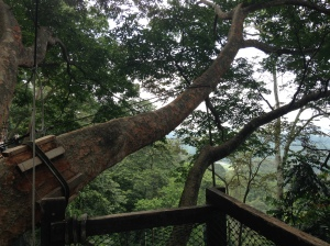 FRIM canopy 9