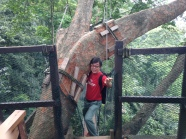 FRIM canopy Lim