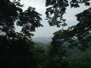 FRIM canopy view