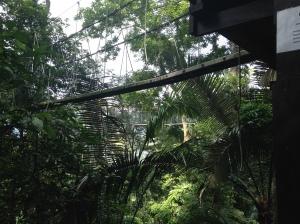 FRIM canopy