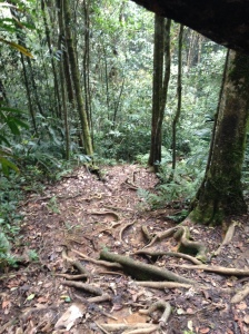 Camerion highlands Jungle trek day one 4