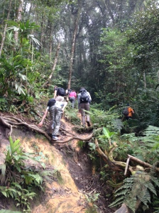 Camerion highlands Jungle trek day one 8