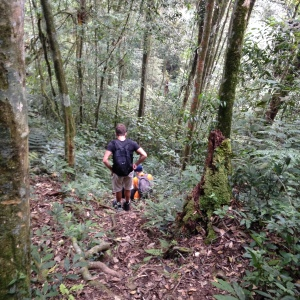 Camerion highlands Jungle trek day one descent