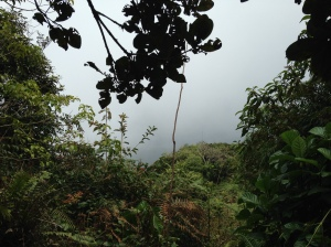 Camerion highlands Jungle trek day one haze view