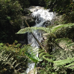 Camerion highlands Jungle trek day one waterfall 2