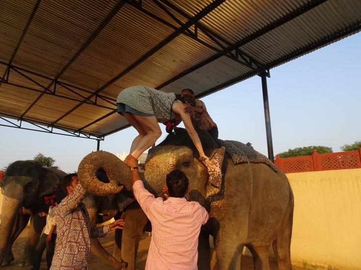 India ele mount 3