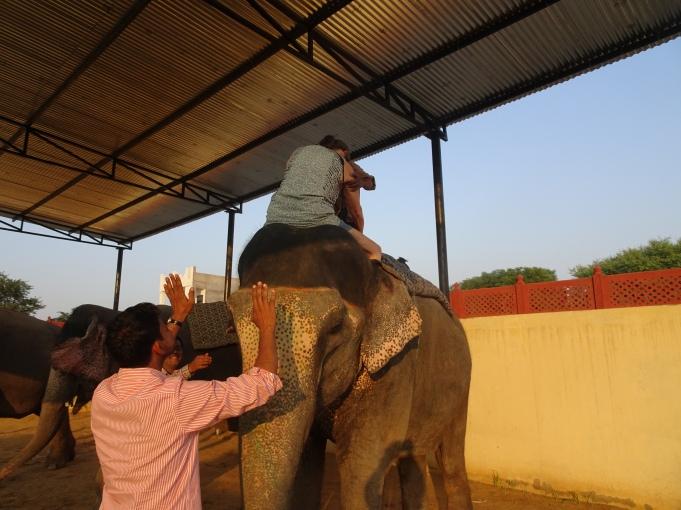 India ele mount 4