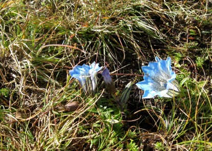blue-bells