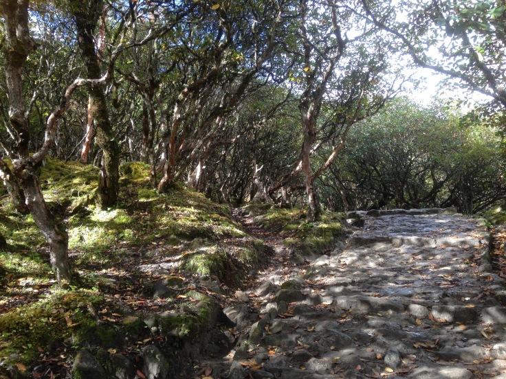 rhododenron-path